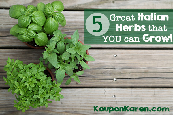 Five GREAT Italian Herbs That You Can Grow