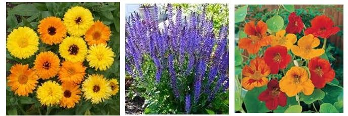 Best Plants To Grow in a Garden